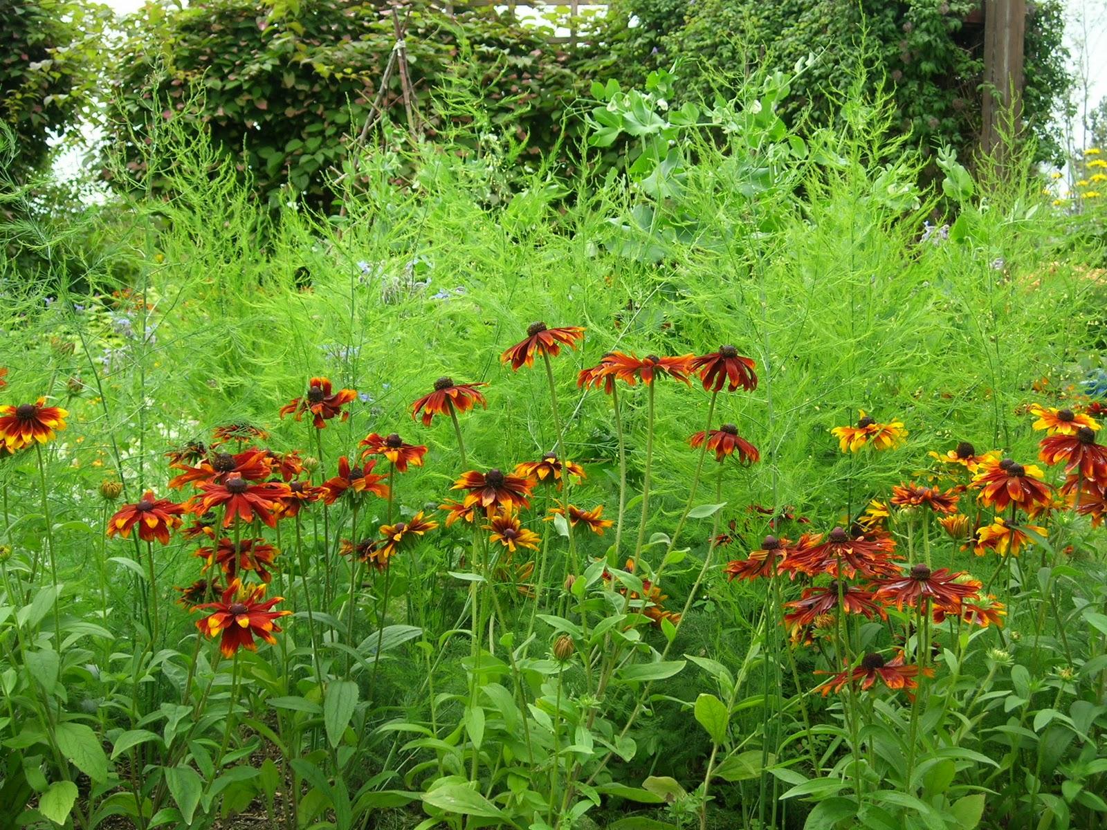 Visningsträdgården Hällans trädgårdsblogg: Trädgårdsland