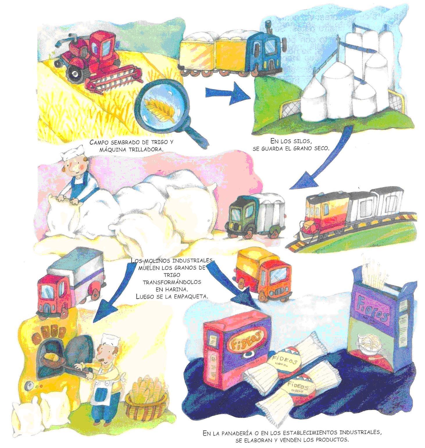 Circuito Productivo Del Trigo : Circuito productivo del pan imagui