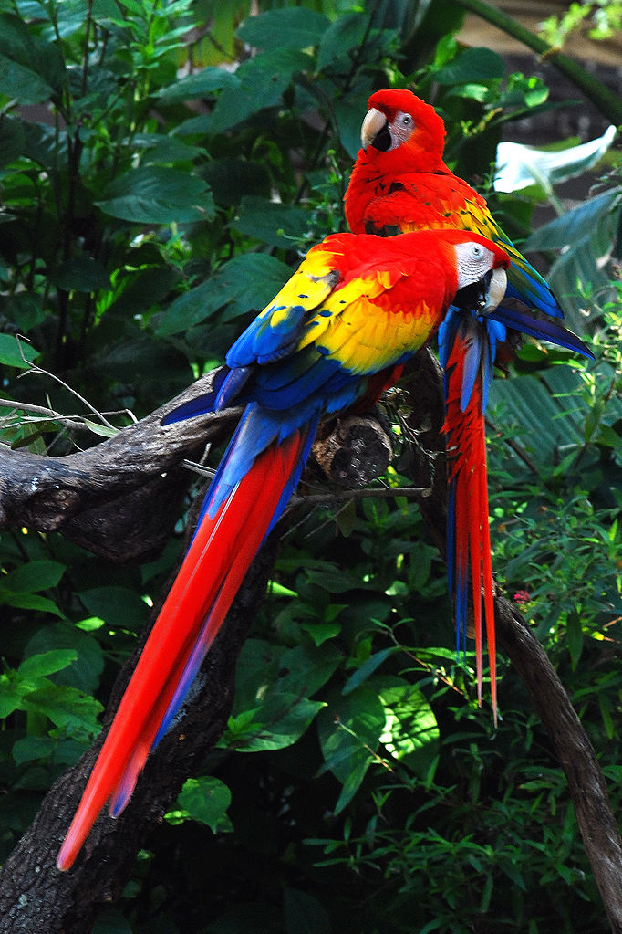 Macaw Colorful Of Parr...
