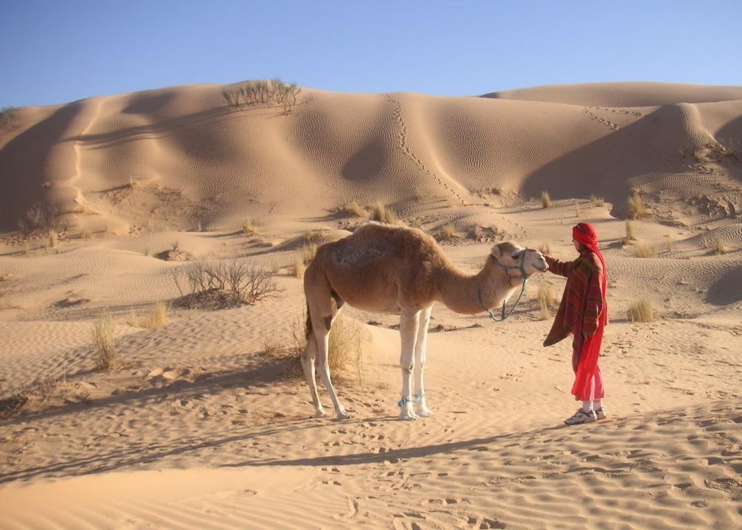 Kameltrekking für Frauen in Tunesien