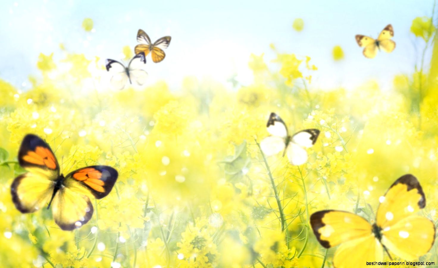 Butterfly Screensavers And Wallpaper