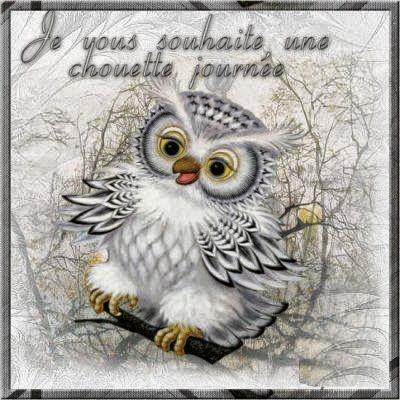 Citations option bonheur bonjour avec image de chouette - Image de chouette gratuite ...
