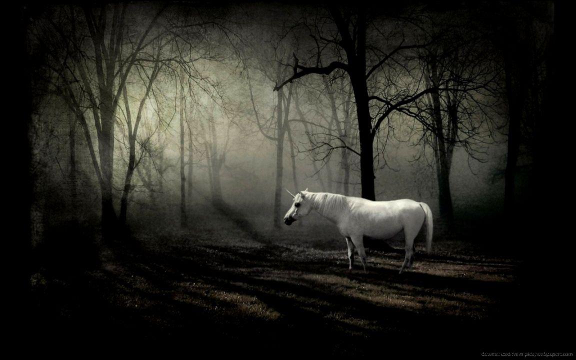 Download 1280x800 Unicorn In Dark Forest Wallpaper