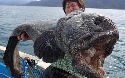 Pria ini Tangkap Ikan Raksasa di Lepas Pantai Jepang
