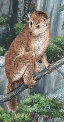 Descrito nuevo primate fósil español