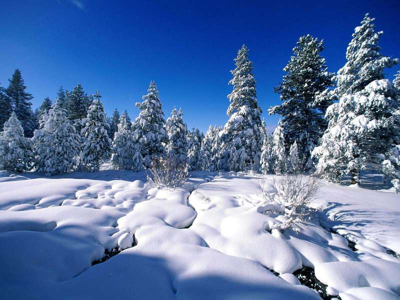 ... . Decorate your desktops with beautiful Christmas Nature Wallpaper