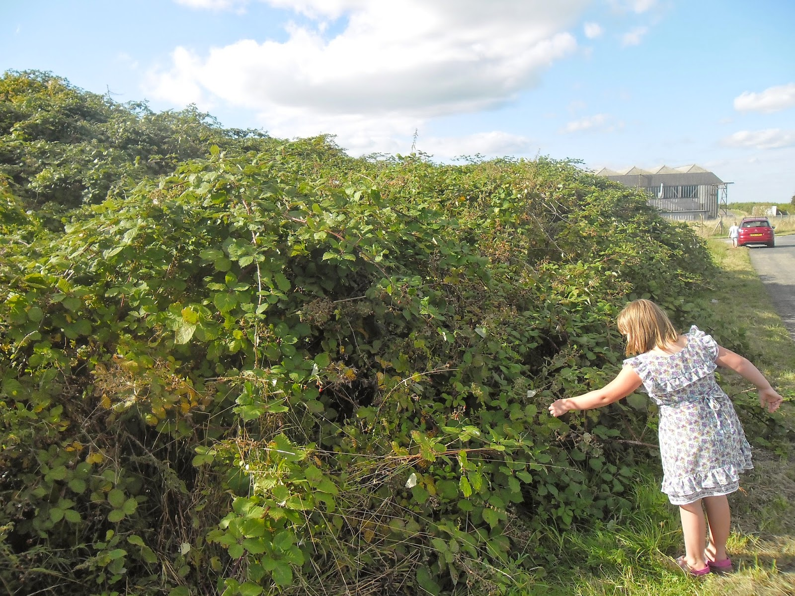 this has got to be the biggest bramble bush in the world
