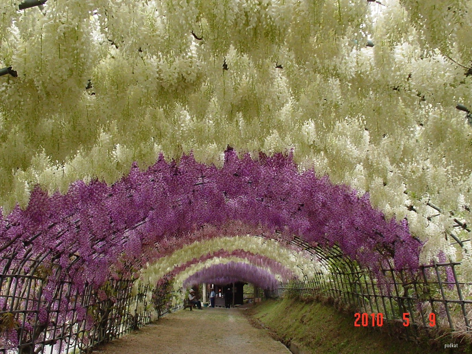 Eclectitude Wisteria Tunnel Kawachi Fuji Gardens Japan
