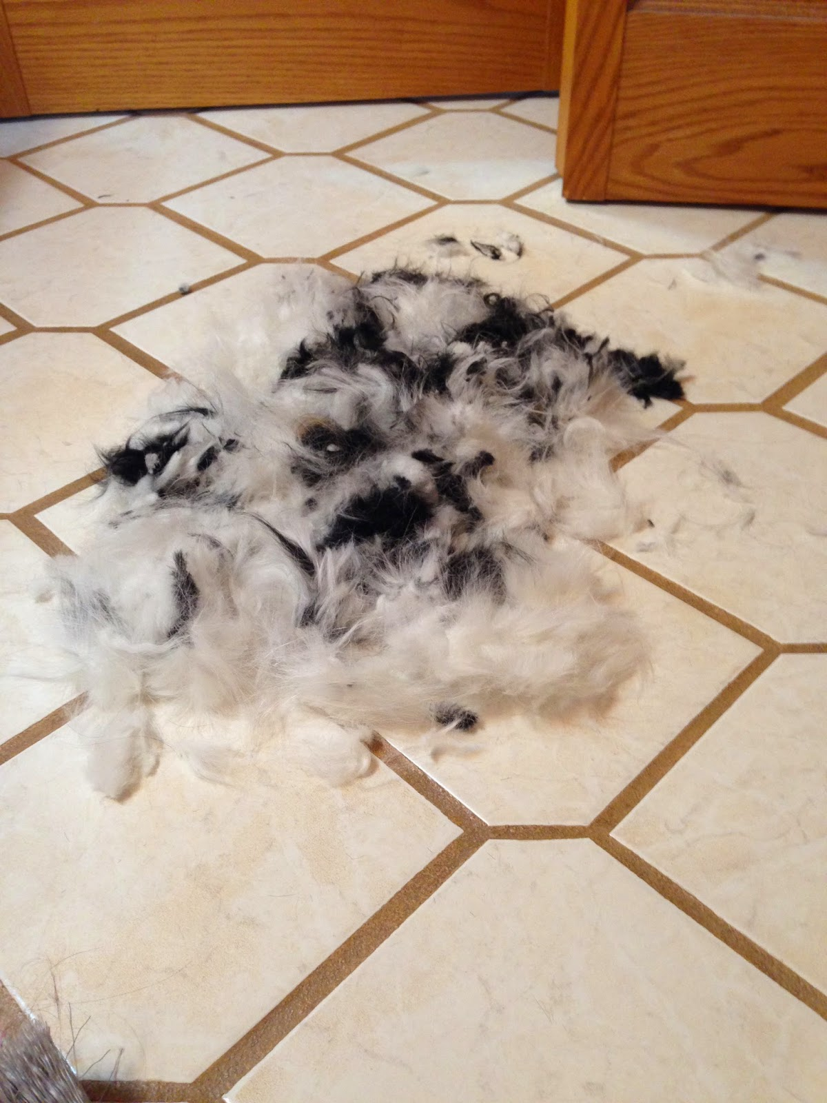 All the fur that we shaved off my dog using clippers.