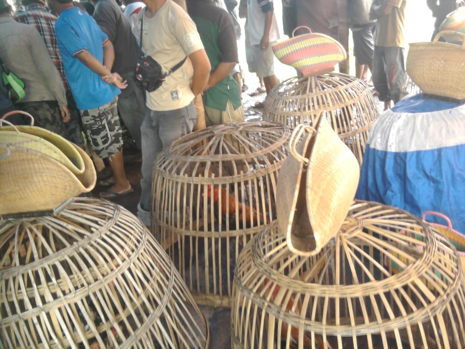 ciri ayam babon birma champion daily forex news