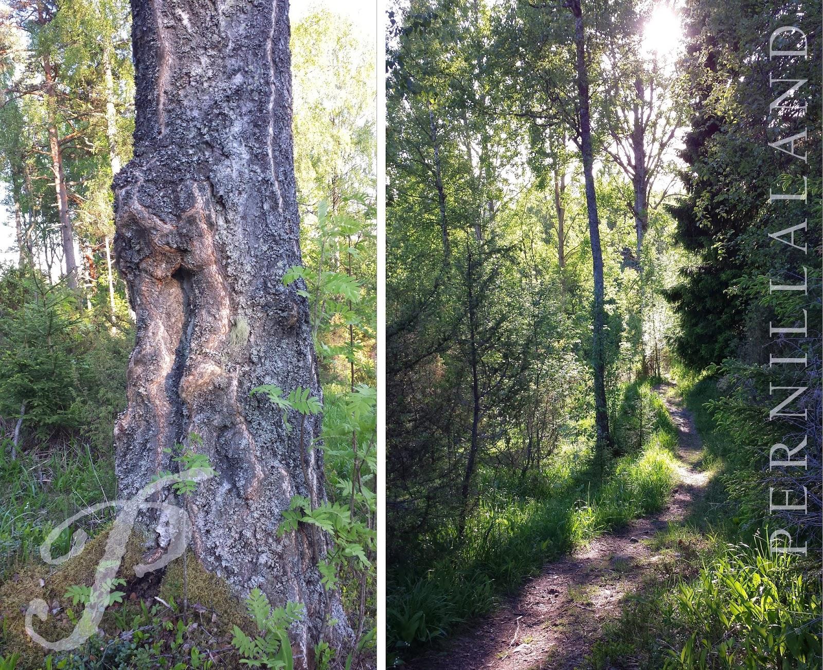 Pernillaland: bloggspecial: dalaristningar, potatismagi & givande ...