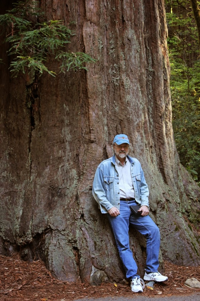 jedediah smith redwoods