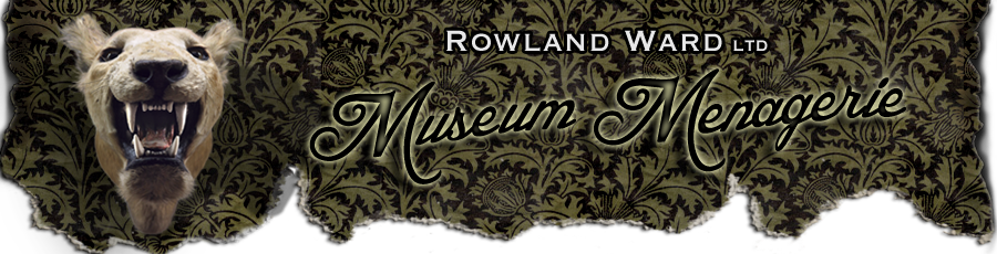 Rowland Ward Taxidermist - Museum Menagerie