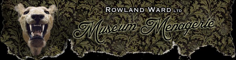 Rowland Ward Taxidermist - Museum Menagerie