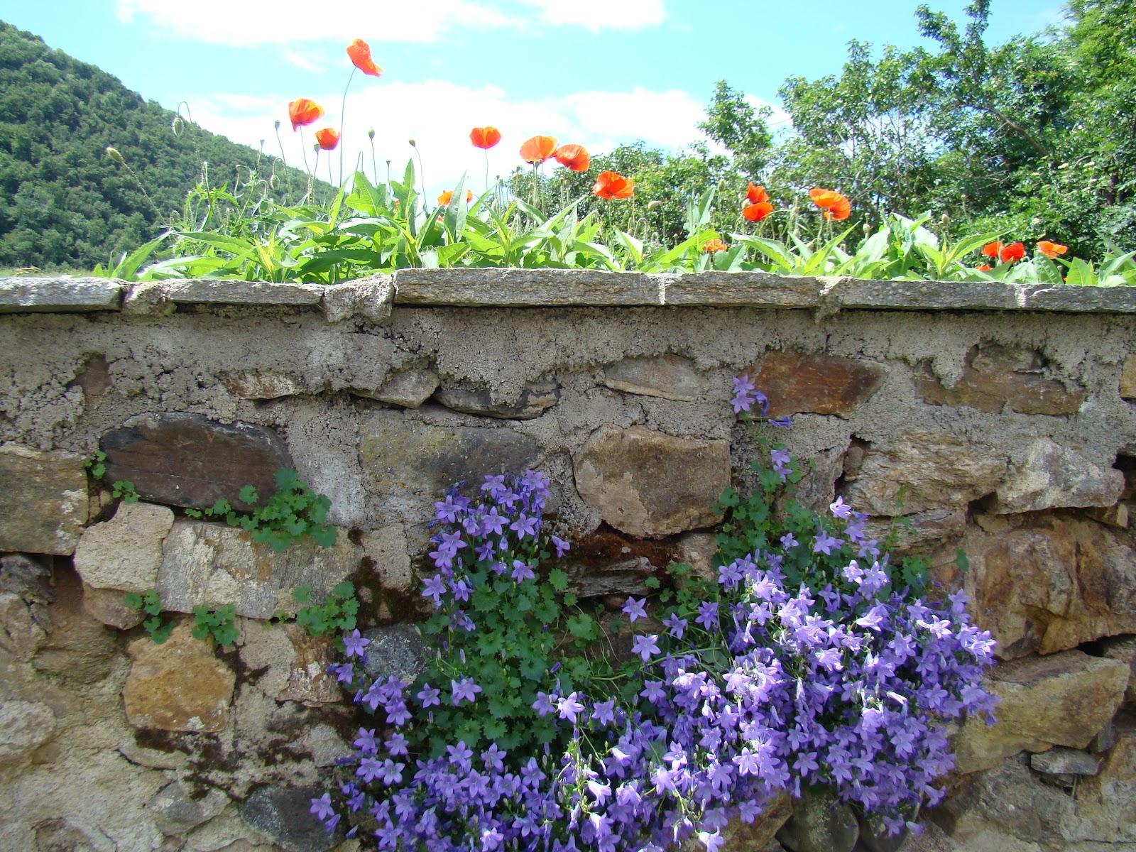 Le jardin d 39 aubeyrat encore de nouvelles fleurs for Jardin fleuri lyon 9