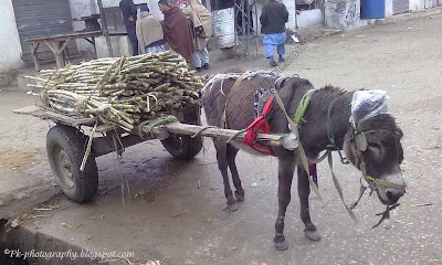 Donkey Cart Picture
