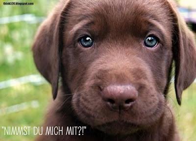Hund mit den Worten Nimmst du mich mit?