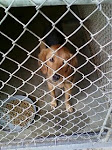 9/28/11 Dogs and Cats Needing Help at North Carolina Heartstick, Gassing Shelter