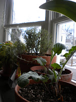 indoor 2Bgarden 2Bjanuary 2B2012 2B001
