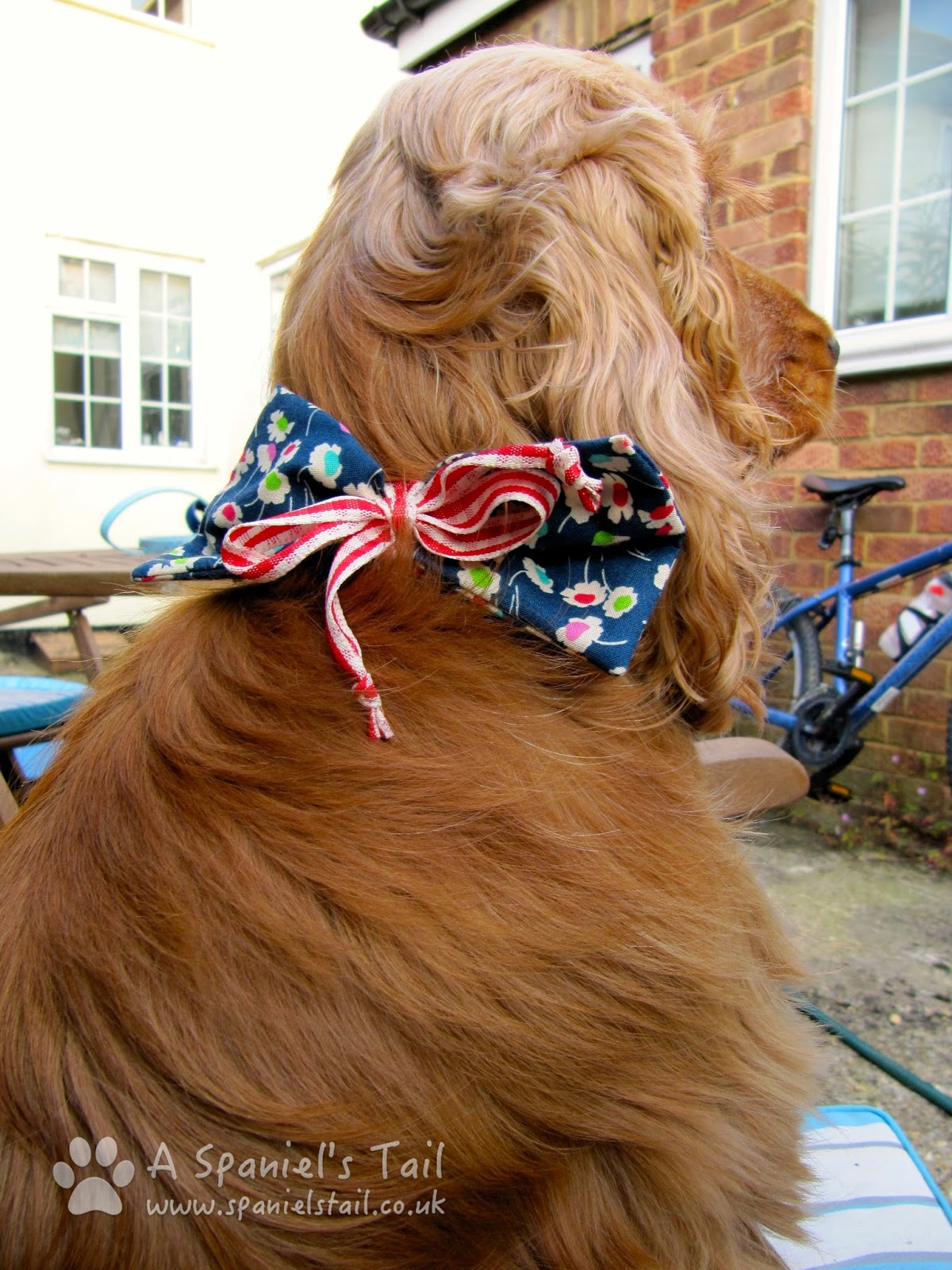 A Spaniels Tail Scrufts product review collar