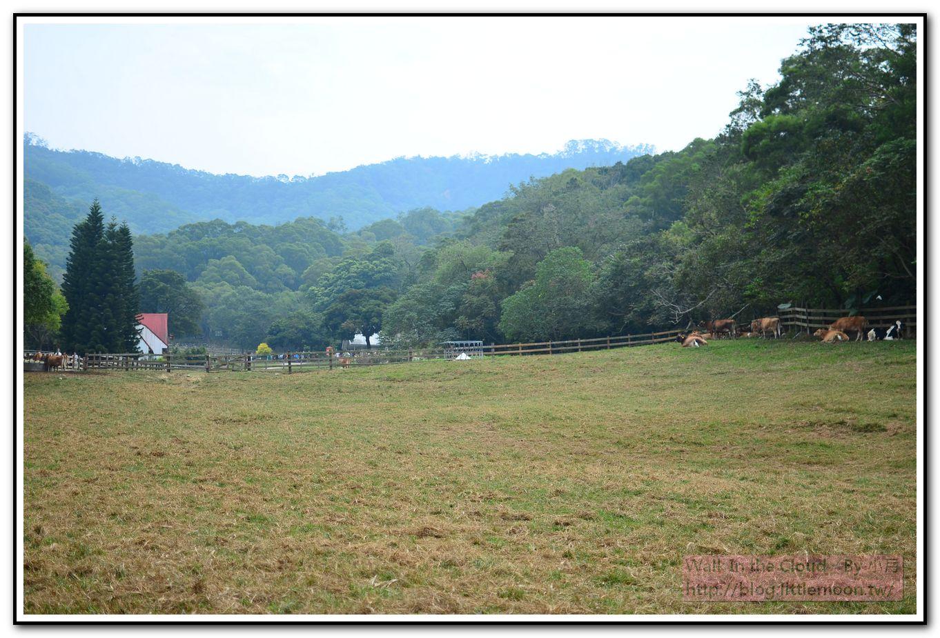 乳牛生態區之窩樹蔭的牛群