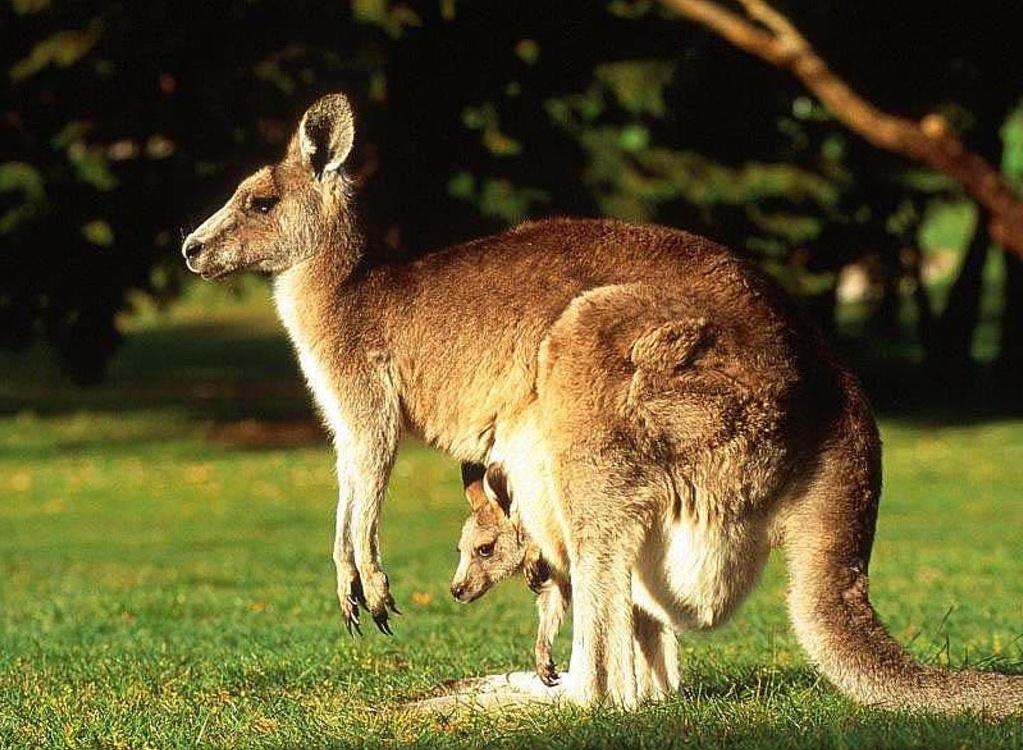 online casino australia kangaroo land