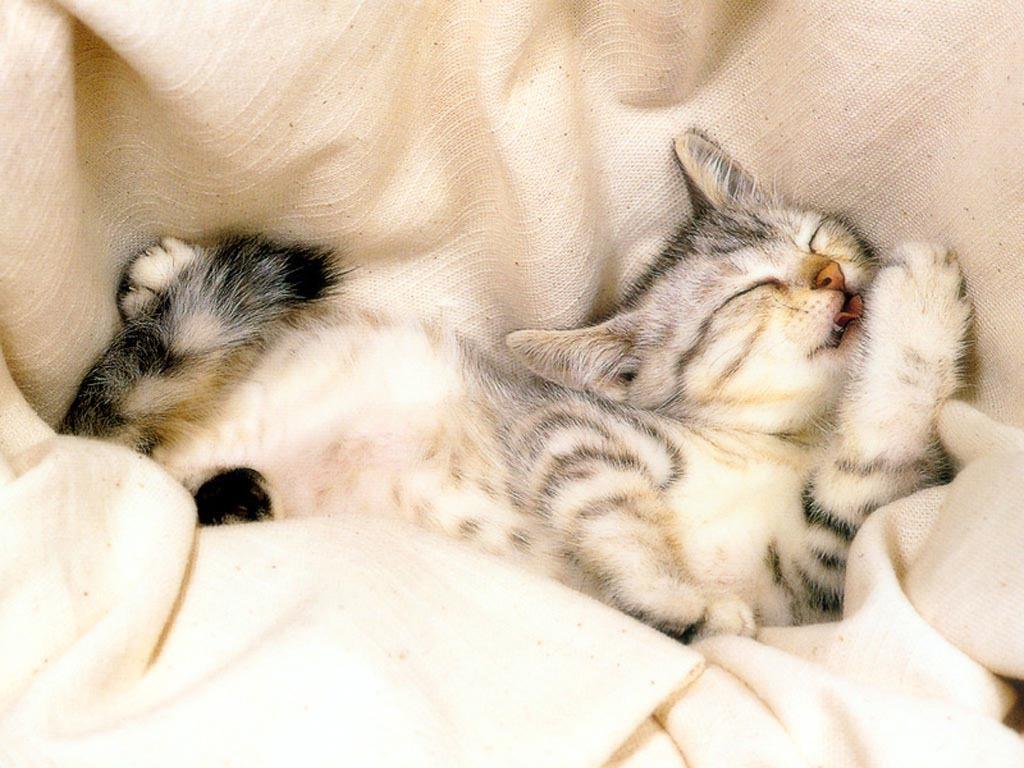 http://3.bp.blogspot.com/-pXY8BmuQNjc/TbdMMBh7CjI/AAAAAAAAAeY/BcyiG3geSjk/s1600/Cat-Wallpaper-cats-9901830-1024-768.jpg