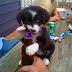 Perro abre cerveza