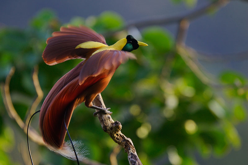 Birds of paradise plant pictures mobile wallpapers - Hd images of birds of paradise ...