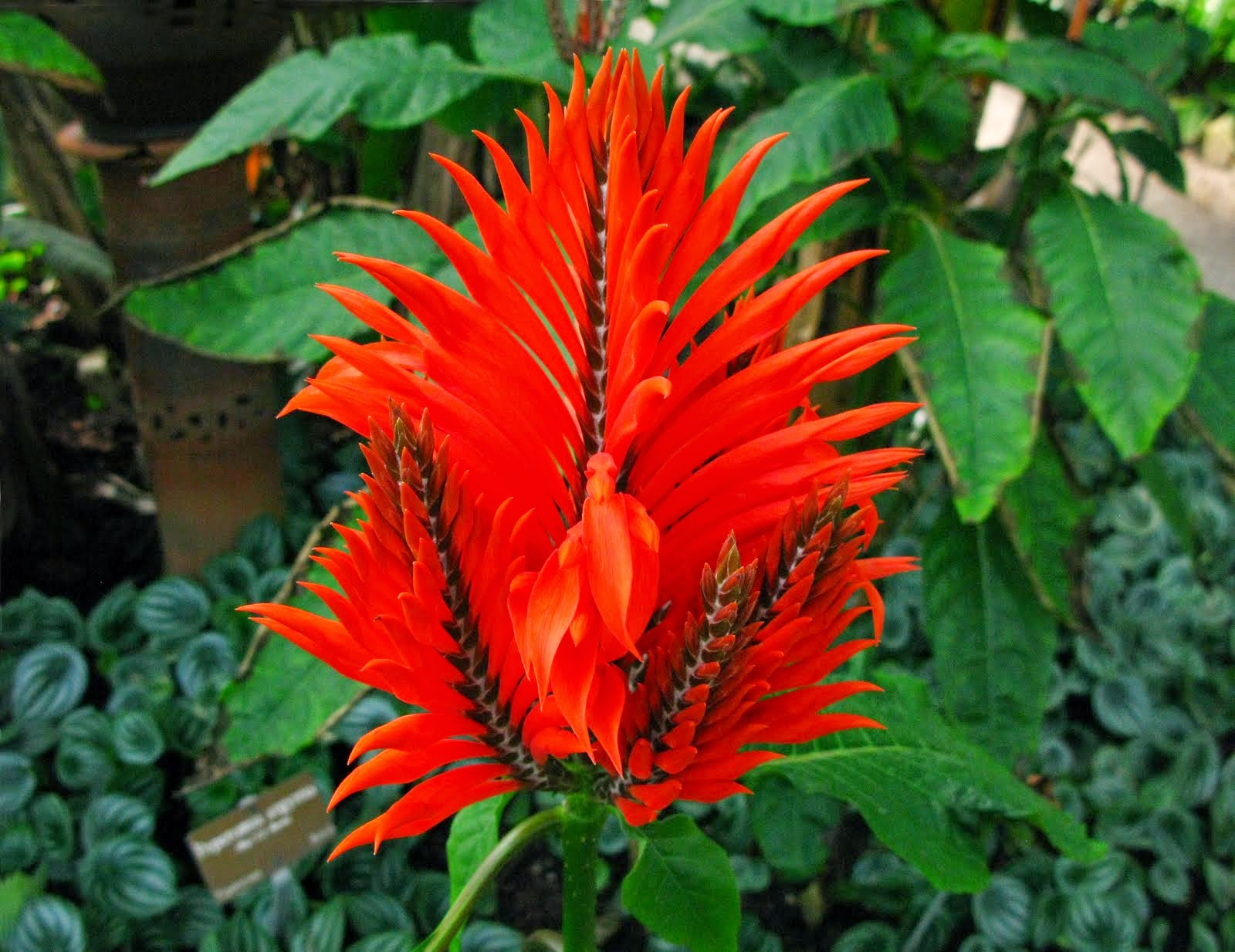 Flores Rojas, parte 6