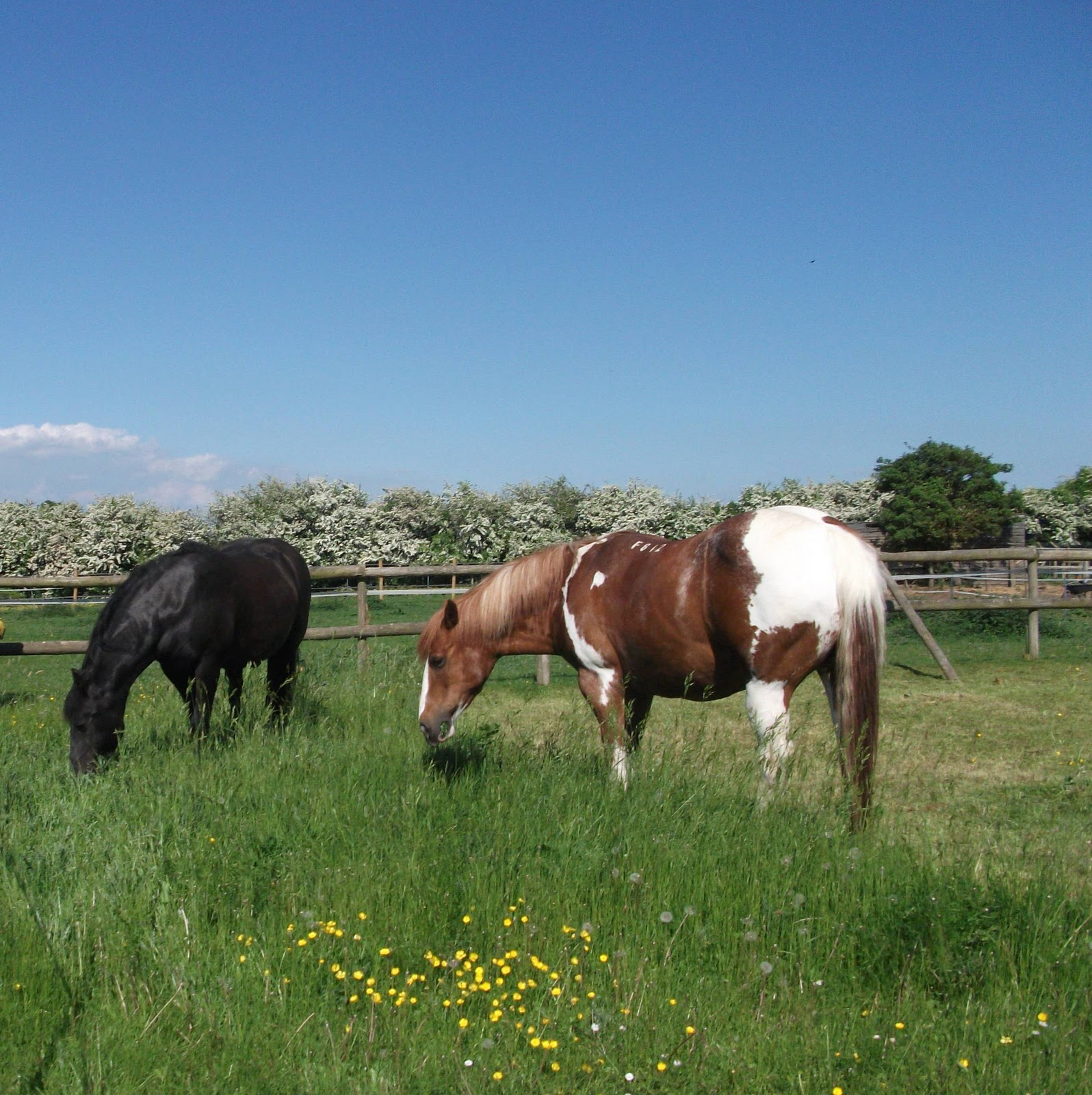 My Writing Space Overlooks Lush Welsh Countryside  And The Paddocks Where  My Two Horses Peacefully Graze