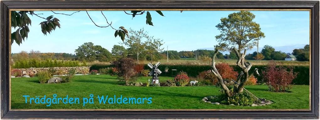 Trädgården på Waldemars