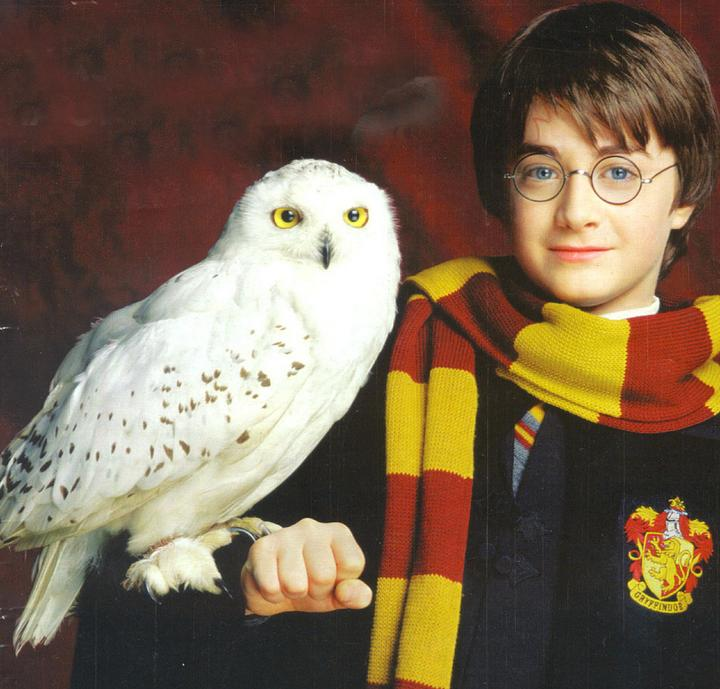 Harry and Hedwig,Halloween makeup ideas, Harry potter halloween