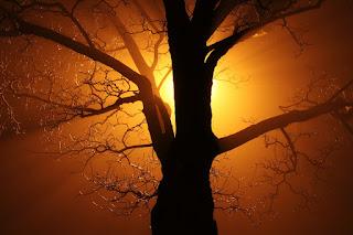 7 Jenis Pohon Yang Dipercaya Dihuni Makhluk Halus