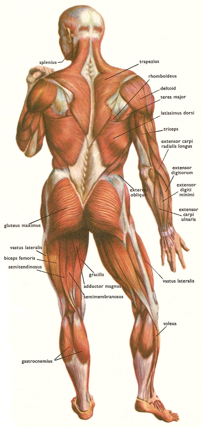 Work the Whole Back Side of the Body With One Move - Ben Bruno