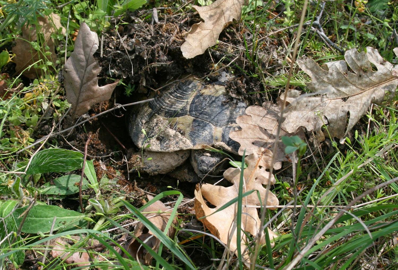 Terry the Tortoise, looking grumpy