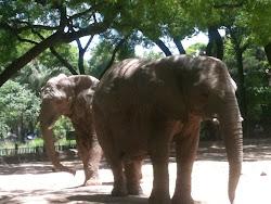 El fin de semana fui al Zoo con mis hijos