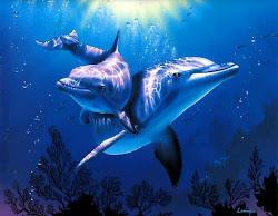 Golfinhos... perfeitos!!