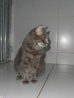Lindt - gatinha para adoção P7080022
