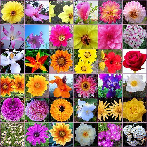 venta flor bach: