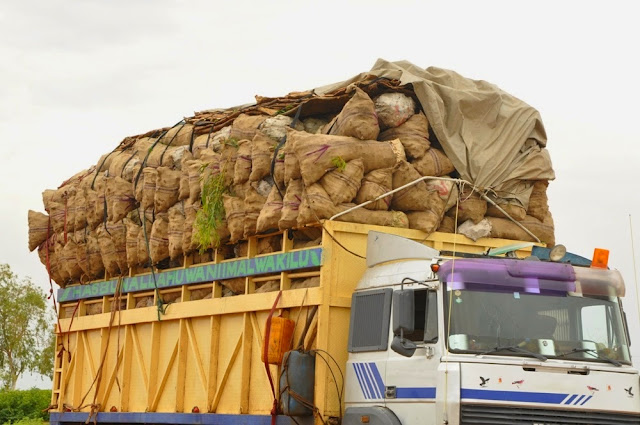 Nigerian Customs intercepts, destroys trailer load of smuggled monkey meat
