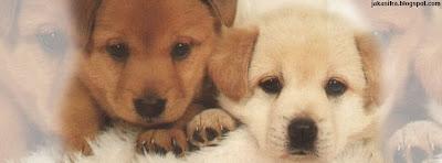 facebook cover, cover image, timeline, naslovne slike, slika za facebook, cute dog, dog picture, cover dog, cute dog image, cute dog picture, cute dog wallpaper, cute pictures of dogs, pics of cute dogs, cute dog pictures, cute pics of dogs, cute dog pics, cute dogs pictures, pictures of cute dogs, cute dog photos, dog breeds and pictures, dog breeds pictures, dog breed pictures, dog breed picture, pictures of dog breeds, small dogs pictures, small dog pictures, small dogs, pictures of small dogs, small dog breeds, small dog beds, small dog clothes, small dog bed, cute puppy picture, cute puppy pictures, cute puppy wallpapers, cute puppies pictures, pictures of cute puppies, cute pictures of puppies, cute puppies for sale, cute puppy pics, pics of cute puppies, funny dogs pictures, funny dog picture, funny pictures of dogs, pictures of funny dogs, dog pics, pics of dogs, pic of dogs, pics of puppies, puppy pics, dog pic, dogs pics, pic of puppies, pic of dog, puppies pics, a pitcher of a dog, pitchers of dogs, dog pitchers, dogs pitchers, pitcher of dog, slike pasa, kucici, kuce, pas slika, pics for timeline on facebook, facebook timeline pictures funny, funny pictures for facebook timeline, funny facebook timeline pics, facebook timeline funny pictures, timeline facebook photoshop, photoshop timeline facebook, best images for facebook timeline