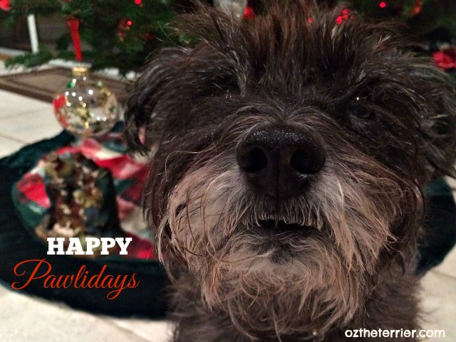 Oz the Terrier wishes everyone a Happy Pawlidays