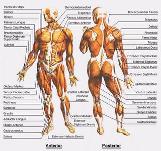 Anatomi Manusia Min Janti Slahung Ponorogo