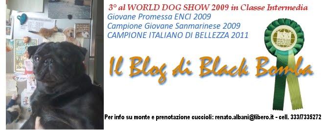 Il Blog di Black Bomba - Cuccioli di Carlino disponibili - Prenotazione monte