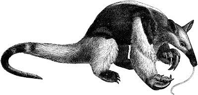 fourmilier, tamanoir, mammifère, myrmécophage, termitophage, Amérique du Sud, Amérique centrale