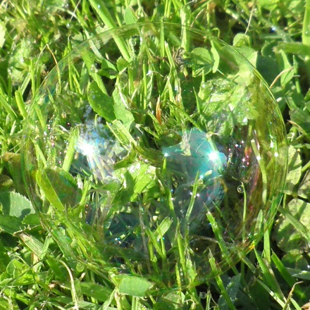 soap bubble on grass
