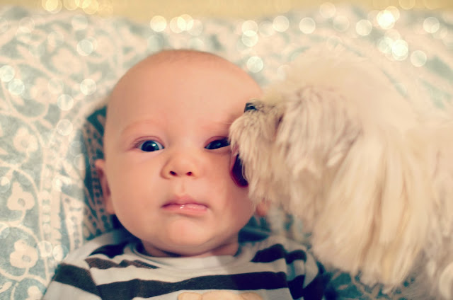 baby and his dog photography photos cute pictures