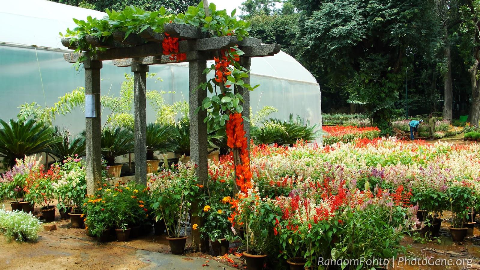 Cubbon Park - Horticulture