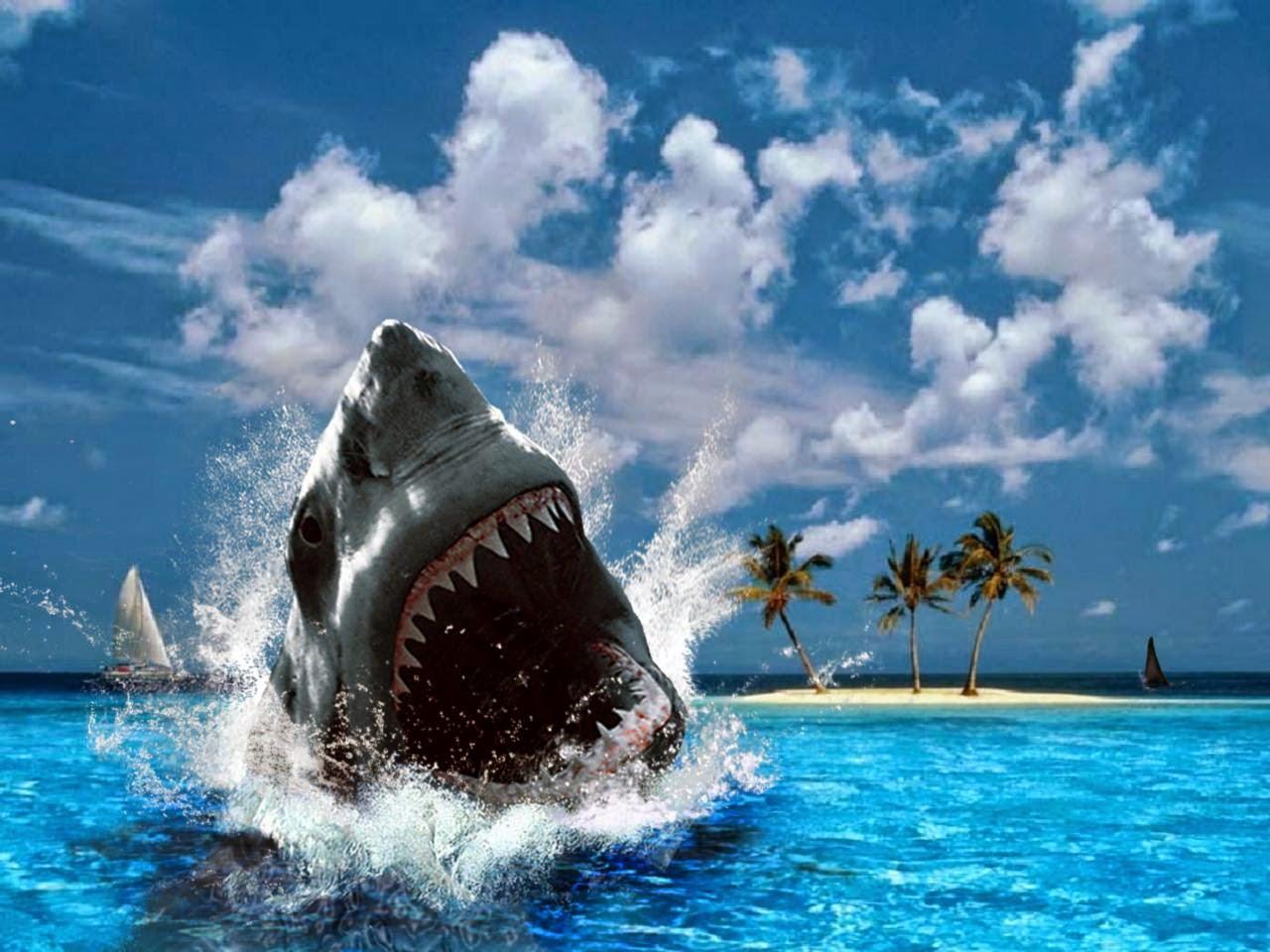 SHARK desktop hd wallpaper